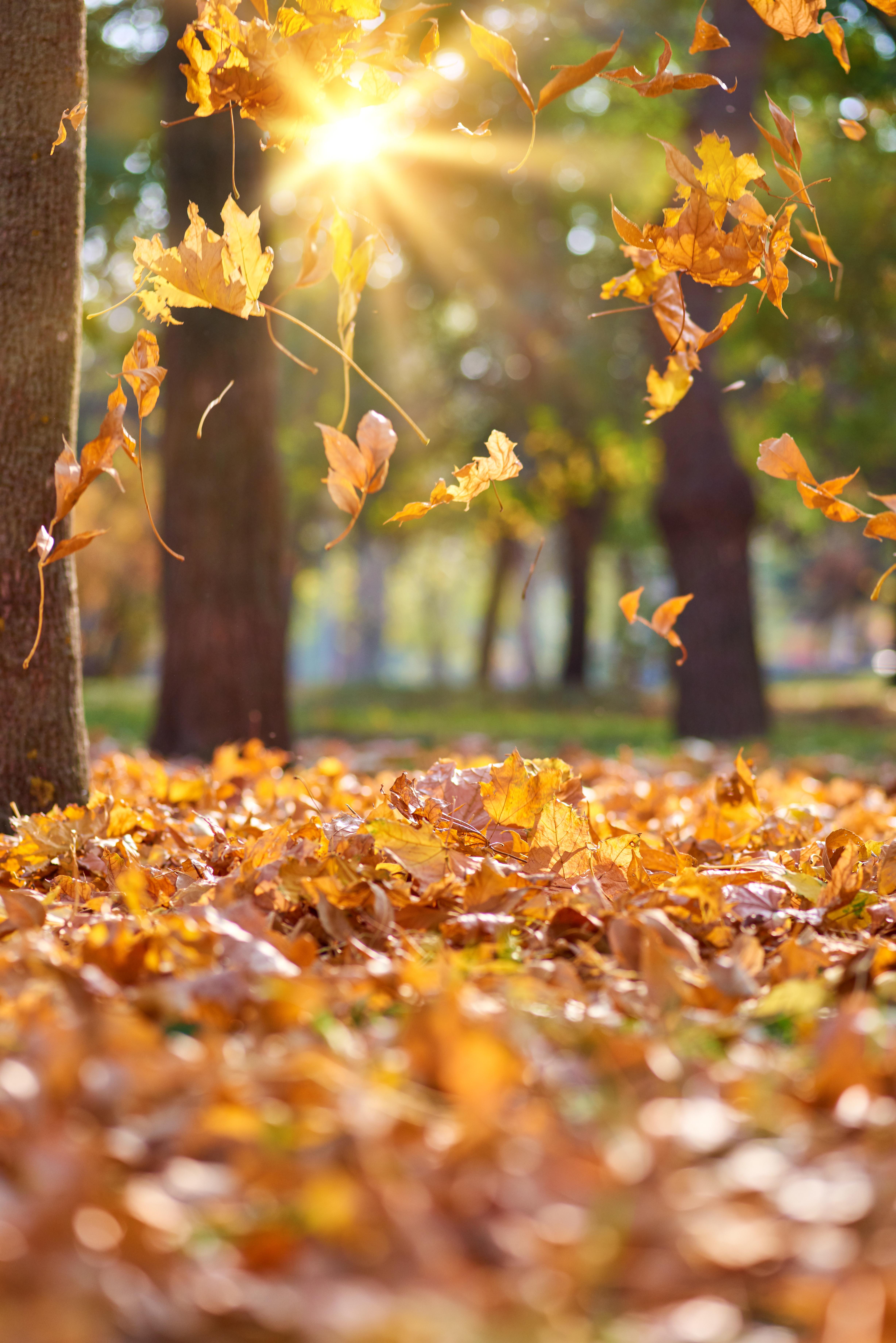 Tawakkul- a leaf falling