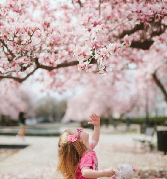 child looking at cherry tree